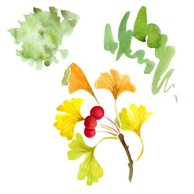 Green ginkgo biloba with leaves isolated on white. Watercolour ginkgo biloba drawing isolated illustration element. stock vector