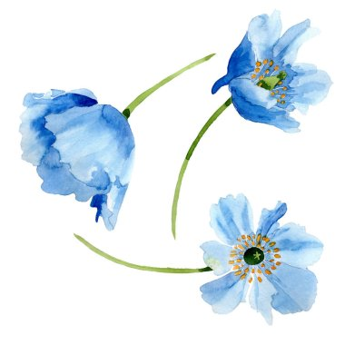 Beautiful blue poppy flowers isolated on white. Watercolor background illustration. Watercolour drawing fashion aquarelle isolated poppy flowers illustration element. stock vector