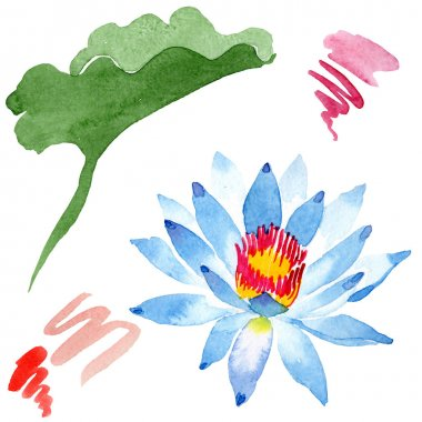 Beautiful blue lotus flower isolated on white. Watercolor background illustration. Watercolour drawing fashion aquarelle isolated lotus illustration element.