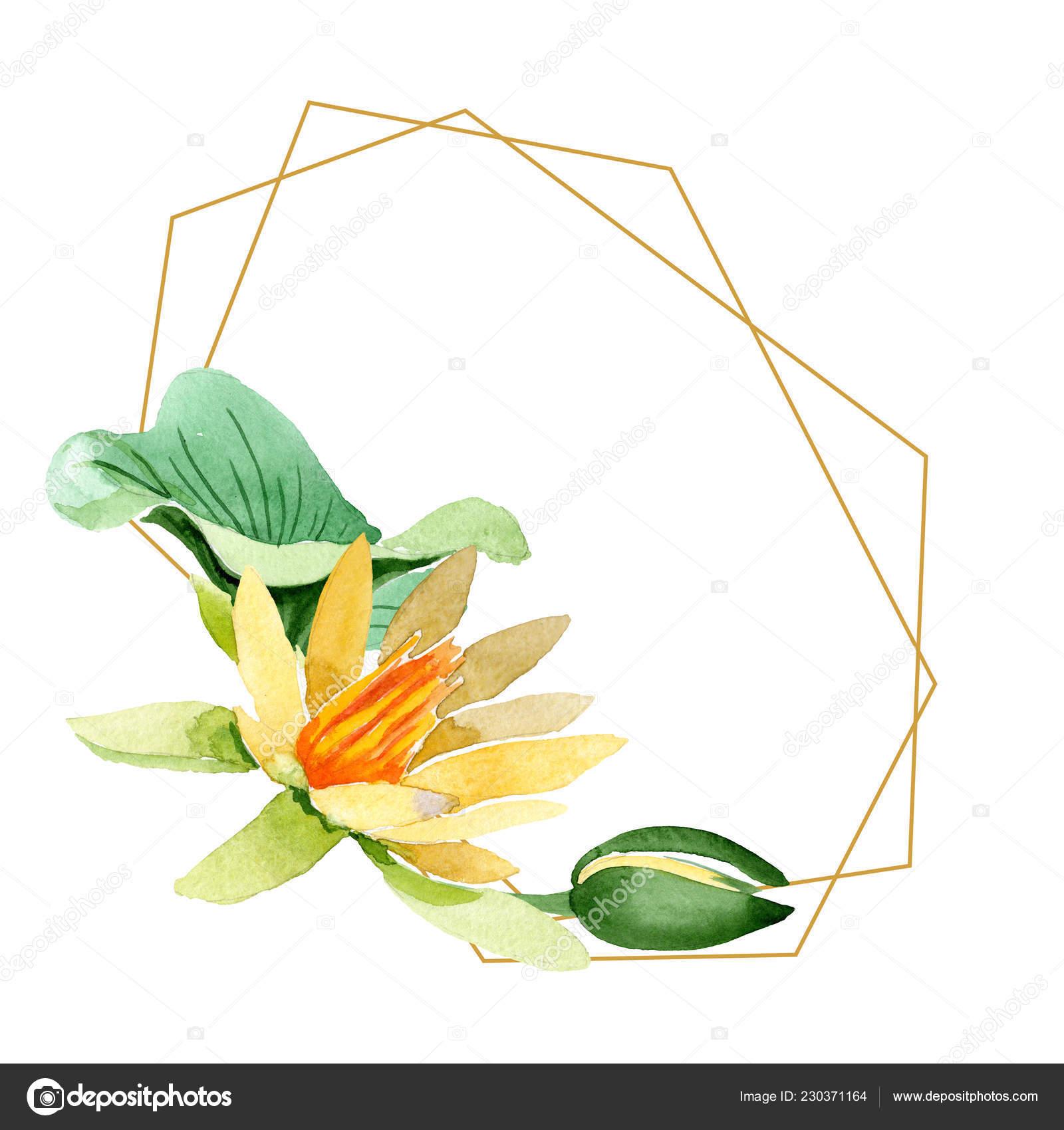 Zluta Lotus Kvetinove Botanicke Kvetin Divoky Jarni Listove