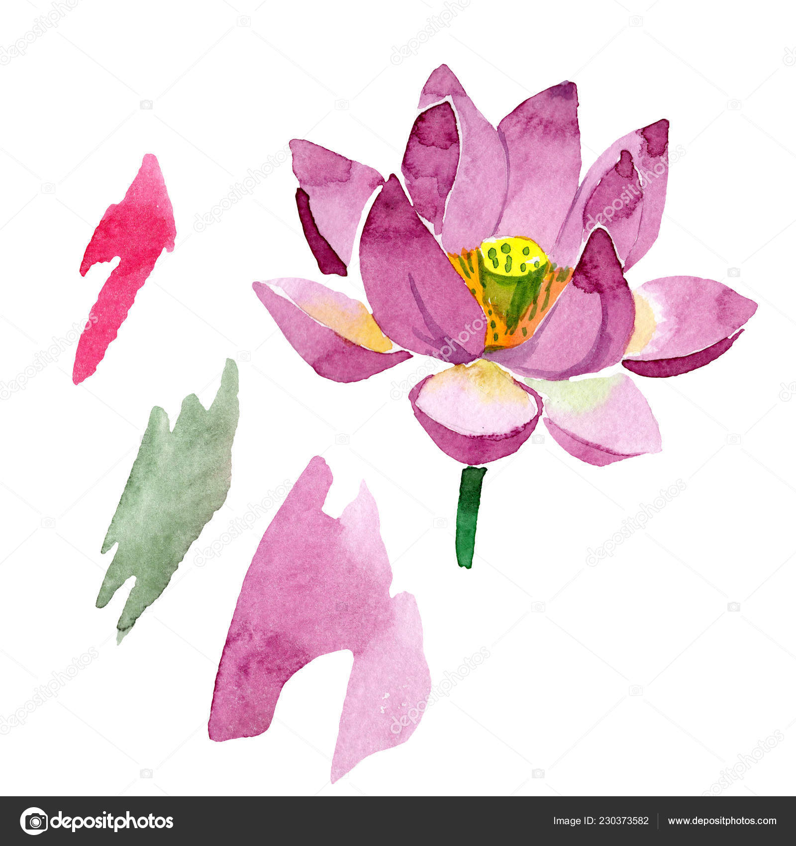 Beautiful Purple Lotus Flower Isolated White Watercolor Background