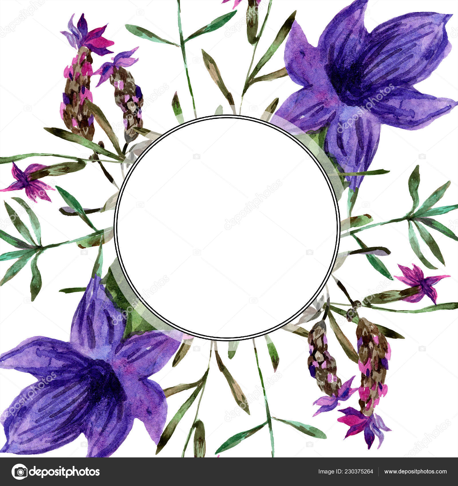 Lindas Flores Lavanda Púrpura Isolados Branco Ilustração