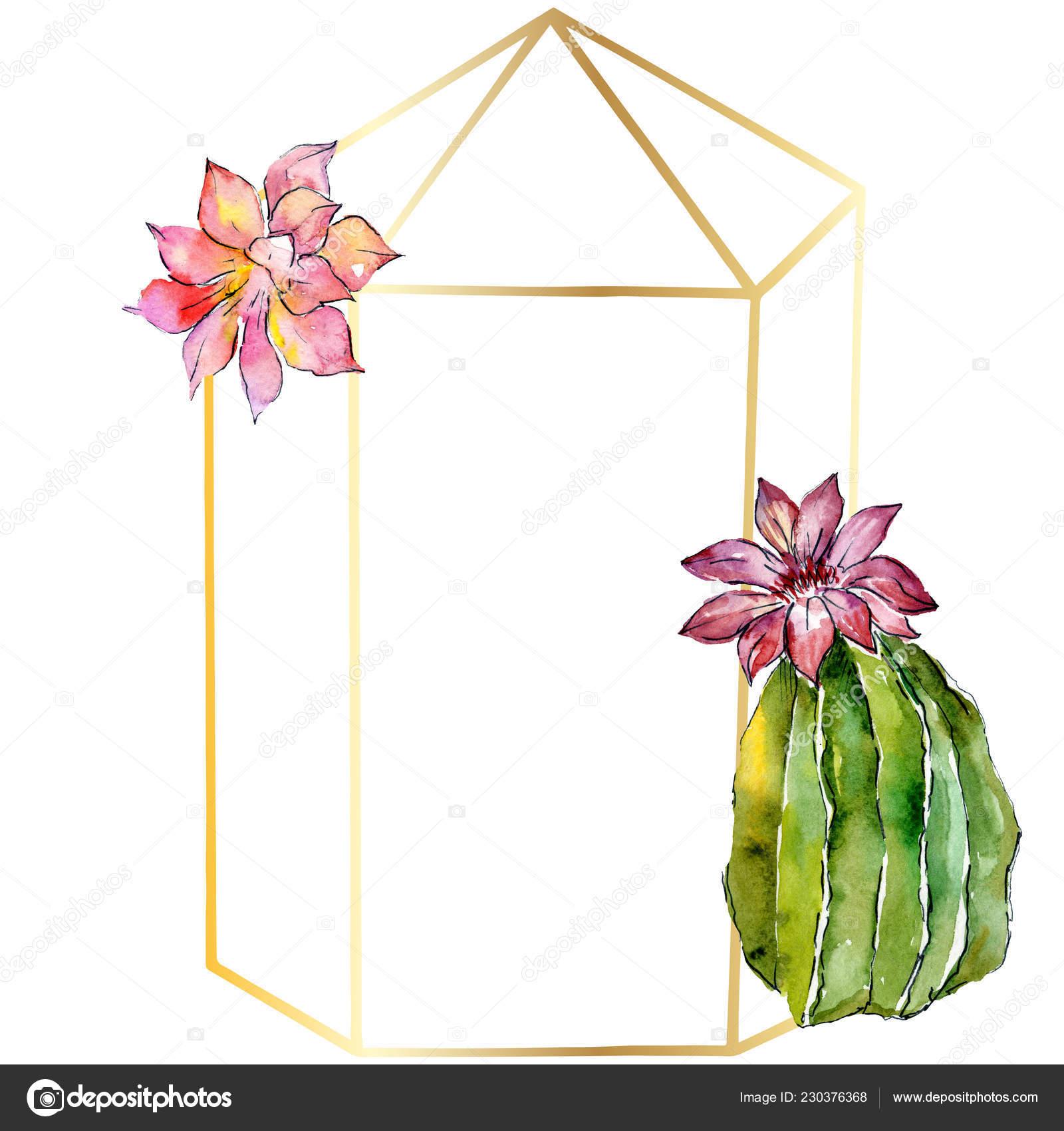 Magnifiques Cactus Verts Isolés Sur Blanc Illustration Fond
