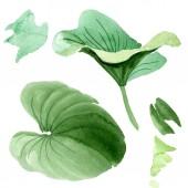 Krásné zelené lotosových listech izolované na bílém. Ilustrace akvarel zázemí. Akvarel výkresu módní aquarelle izolované lotosové listy ilustrace prvek