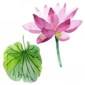 Gyönyörű lila lótuszvirág elszigetelt fehér. Akvarell háttér illusztráció. Akvarell, rajz, divat aquarelle elszigetelt lotus flower ábra elem