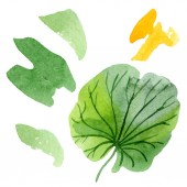 Gyönyörű zöld lotus leaf elszigetelt fehér. Akvarell háttér illusztráció. Akvarell, rajz, divat aquarelle elszigetelt ábra elem