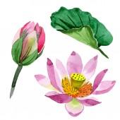 Fényképek Gyönyörű lila virágok elszigetelt fehér. Akvarell háttér illusztráció. Akvarell, rajz, divat aquarelle elszigetelt lótusz virágok ábra elem