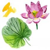 Fotografie Krásné fialové Lotosový květ izolované na bílém. Ilustrace akvarel zázemí. Akvarel, kresba módní aquarelle izolované lotus flower ilustrace prvek