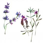 Fényképek Gyönyörű lila levendula virágok elszigetelt fehér. Akvarell háttér illusztráció. Akvarell, rajz, divat aquarelle elszigetelt lavenders ábra elem