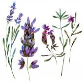 Fotografie Krásné fialové květy levandule izolované na bílém. Ilustrace akvarel zázemí. Akvarel, kresba módní aquarelle izolované levandule ilustrace prvek
