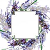 Krásné fialové květy levandule izolované na bílém. Ilustrace akvarel zázemí. Akvarel výkresu módní aquarelle. Frame hranice ornament
