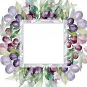 Černé olivy na větvích se zelenými listy. Botanická zahrada květinové listy. Akvarelu ilustrace na bílém pozadí. Čtvercový rám.