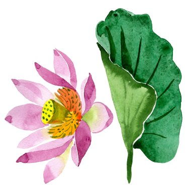 Beautiful purple lotus flower isolated on white. Watercolor background illustration. Watercolour drawing fashion aquarelle isolated lotus flower illustration element