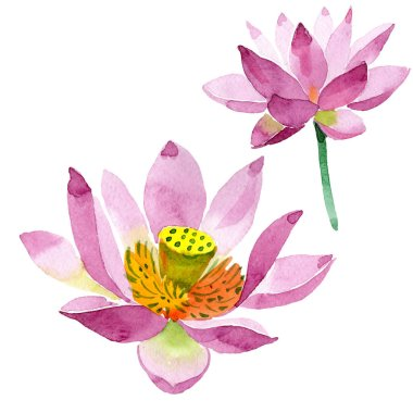 Beautiful purple lotus flowers isolated on white. Watercolor background illustration. Watercolour drawing fashion aquarelle isolated lotus flowers illustration element