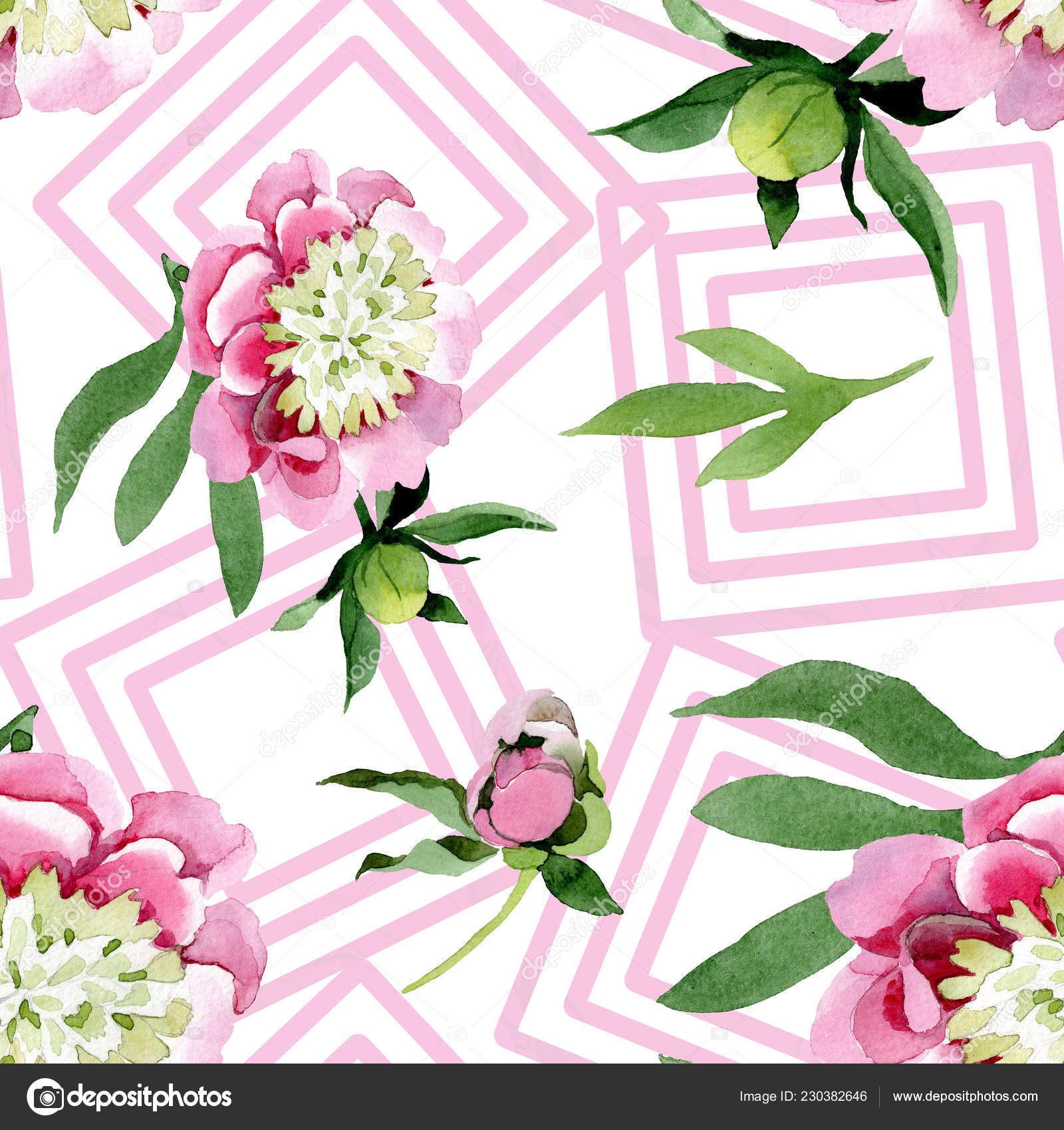 Flores Peônia Rosa Linda Com Folhas Verdes Isoladas Fundo