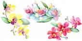Nádherné květy orchidejí se zelenými listy izolované na bílém. Ilustrace akvarel zázemí. Akvarel výkresu módní aquarelle. Prvek ilustrace izolované orchideje