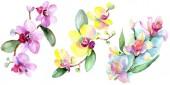 Fényképek Gyönyörű orchideák elszigetelt fehér, zöld levelekkel. Akvarell háttér illusztráció. Akvarell rajz divat aquarelle. Elszigetelt orchideák ábra elem