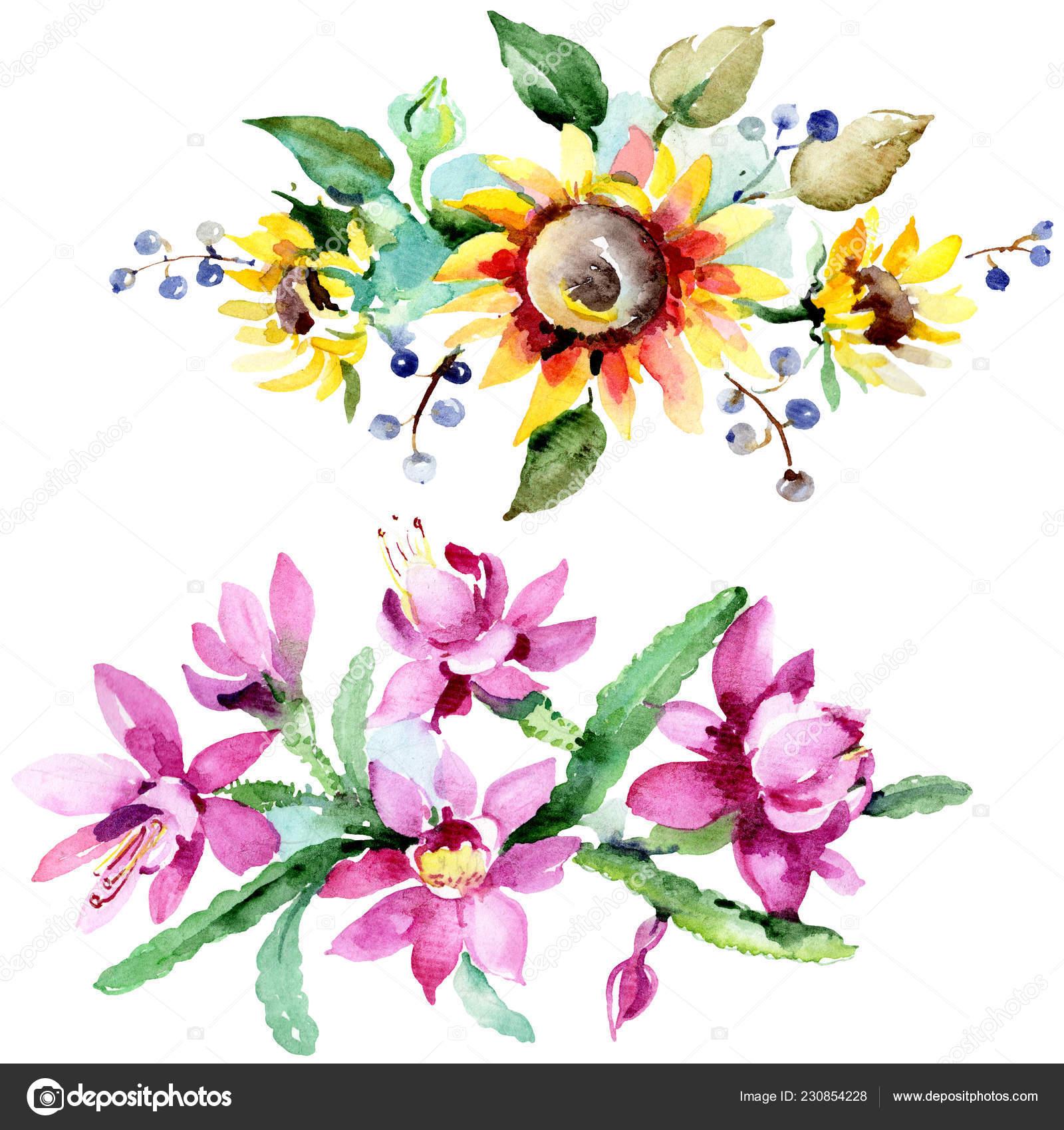 Lindas Flores Aquarela Sobre Fundo Branco Ilustração
