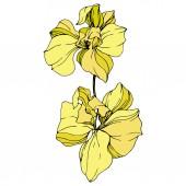 Fotografia Bei fiori gialli dellorchidea isolati su bianco. Elemento di illustrazione di orchidee gialle isolato su priorità bassa bianca