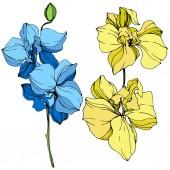 Gyönyörű, kék és sárga, orchidea virágok vésett tinta art. Elszigetelt orchideák ábra elem fehér háttér.