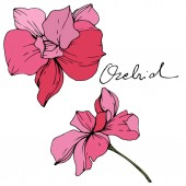 Beautiful pink orchid flowers. Engraved ink art. Orchids illustration element on white background.