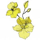 Gyönyörű sárga orchidea virágok. Vésett tinta art. Elszigetelt orchideák ábra elem fehér háttér.