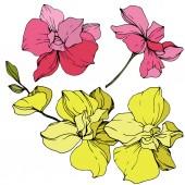 Gyönyörű rózsaszín és sárga orchidea virágok. Vésett tinta art. Orchideák ábra elem fehér háttér.
