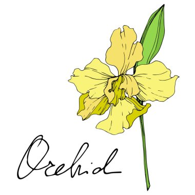 Beautiful yellow orchid flower isolated on white. Yellow isolated orchid illustration element on white background.
