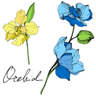 Beautiful blue and yellow orchid flowers engraved ink art. Isolated orchids illustration element on white background. clip art vector
