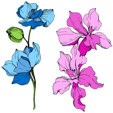 Beautiful blue and pink orchid flowers engraved ink art. Isolated orchids illustration element on white background. stock vector