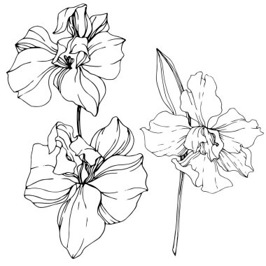 Beautiful black and white orchid flowers engraved ink art. Isolated orchids illustration element on white background. clip art vector