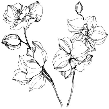 Beautiful black and white orchid flowers engraved ink art. Isolated orchids illustration element on white background. stock vector