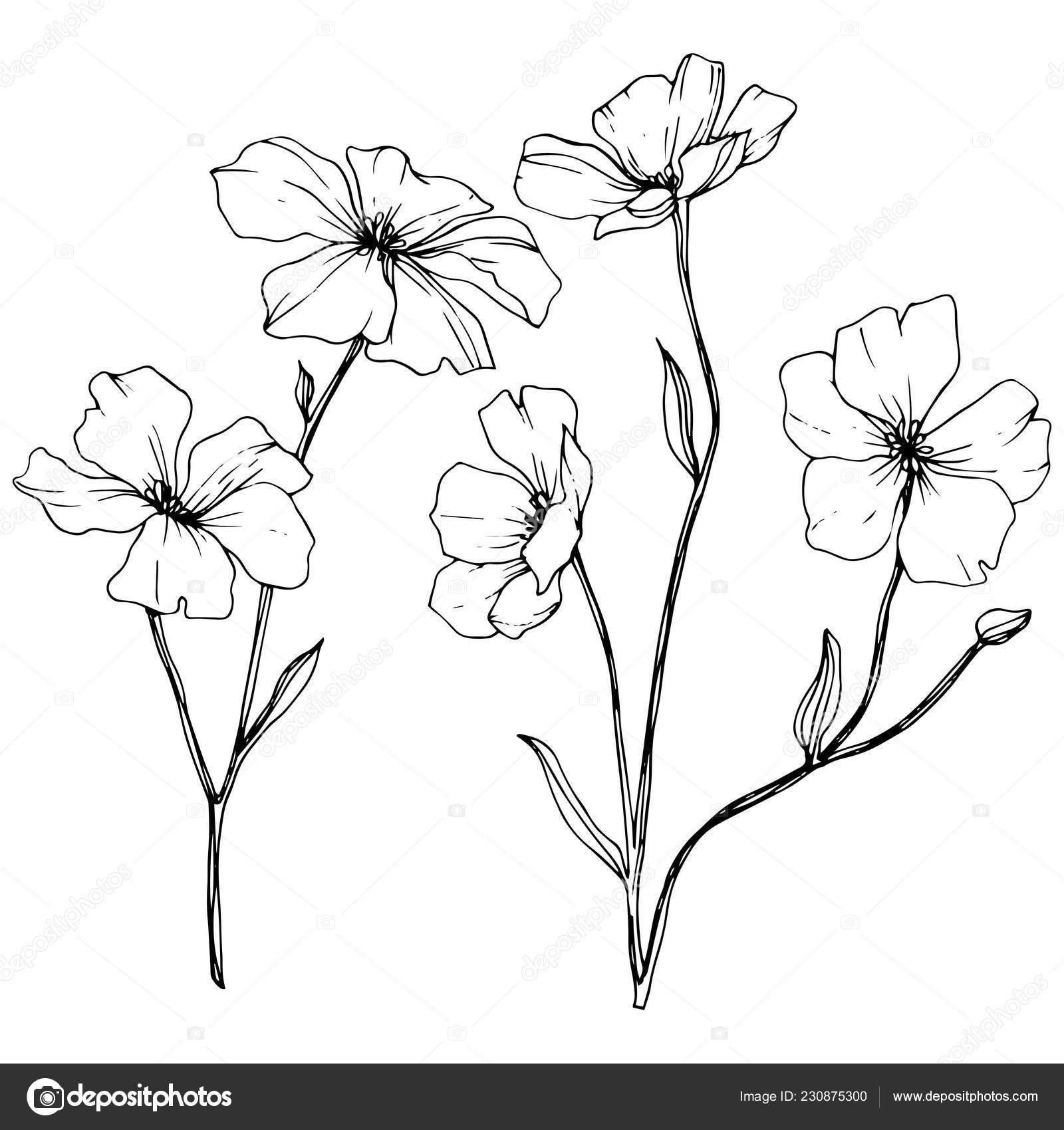 Vector Isolated Flax Flowers Illustration Element White Background Black White Vector Image By C Andreyanush Vector Stock 230875300