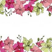 Fotografie Schöne rosa und gelbe Orchidee blüht. Gravierte Tinte Kunst. Floral Grenzen auf weißem Hintergrund