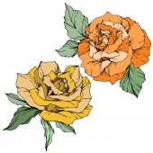 Vektor. Žluté a oranžové růže s zelenými listy izolované na bílém pozadí. Ryté inkoust umění.