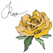 Photo Beautiful yellow rose flower with green leaves. Isolated rose illustration element. Engraved ink art.