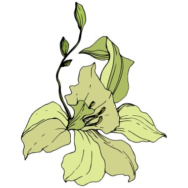 Beautiful yellow orchid flower. Engraved ink art. Isolated orchid illustration element on white background. clip art vector