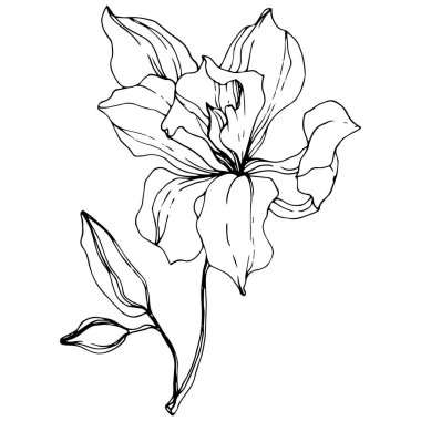 Beautiful orchid flower. Black and white engraved ink art. Isolated orchid illustration element on white background. clip art vector