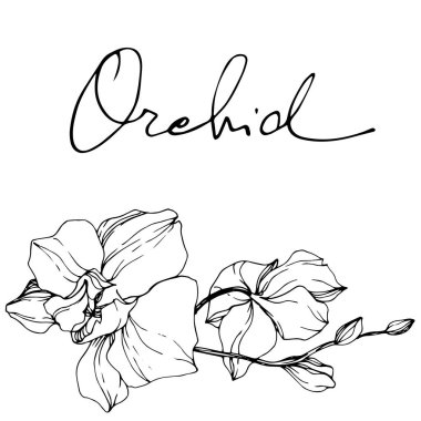 Beautiful orchid flowers. Black and white engraved ink art. Isolated orchids illustration element on white background. clip art vector
