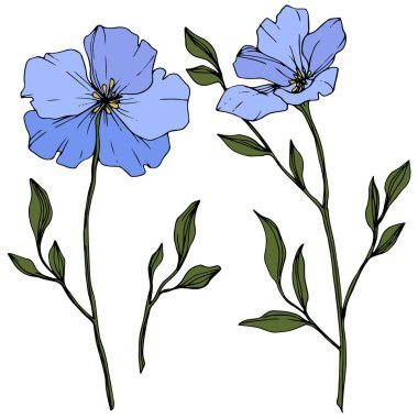 Beautiful blue flax flowers with green leaves isolated on white. Engraved ink art. clip art vector