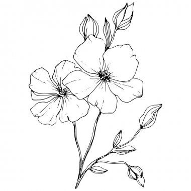 Vector. Isolated flax flowers illustration element on white background. Black and white engraved ink art. clip art vector