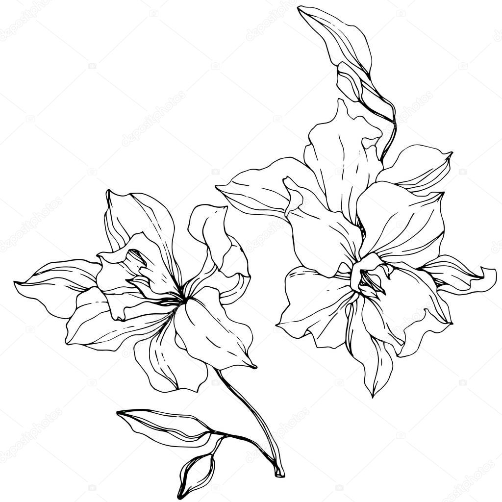 Beautiful Orchid Flowers Black And White Engraved Ink Art Isolated Orchids Illustration Element On White Background Premium Vector In Adobe Illustrator Ai Ai Format Encapsulated Postscript Eps Eps Format,Personalized Gift Ideas For Girls