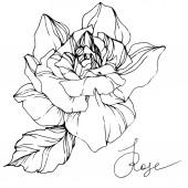 Květ růže nádherné vektorové izolovaných na bílém pozadí. Černá a bílá vyryto inkoust umění.