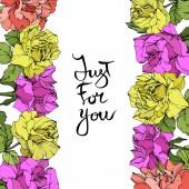 Fotografie Vektor. Rosen-Blumen floral Grenzen. Lila, gelbe und korallene Rosen graviert Tinte Kunst. Nur für Sie Handschrift Monogramm Kalligraphie