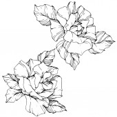 Vektor. Rózsaszirom elszigetelt illusztráció eleme a fehér háttér előtt. Fekete-fehér gravírozott art festék