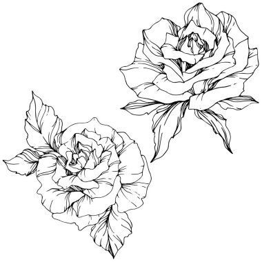 Beautiful vector rose flowers isolated on white background. Black and white engraved ink art. stock vector