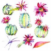 Zöld kaktuszok, rózsaszín virágokkal. Akvarell illusztráció készlet.