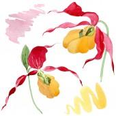 Fotografie Lady střevíček orchideje akvarel ilustrace sada izolované na bílém