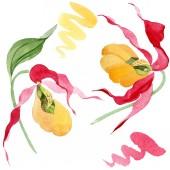 Lady slipper orchideák akvarell illusztráció készlet elszigetelt fehér