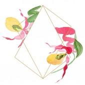 Lady slipper orchideák akvarell képkeret illusztráció elszigetelt fehér másolás hely